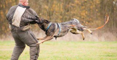 Rüyada Köpek Isırması ve Acıması