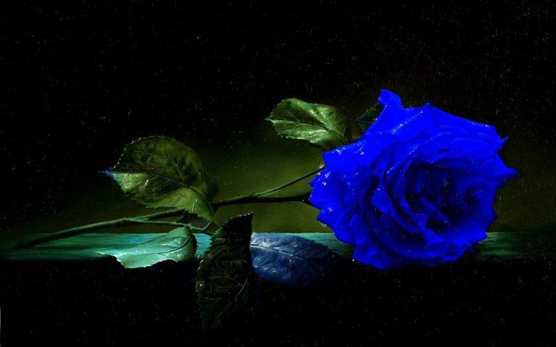 Rüyada Mavi Gül Almak