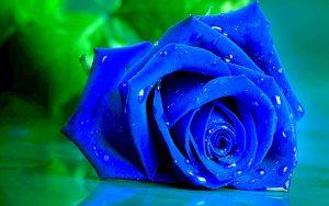 Rüyada Mavi Gül Çiçeği Almak