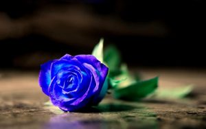 Rüyada Sevgiliye Mavi Gül Almak