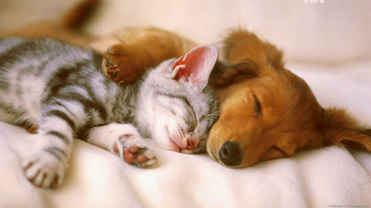 Rüyada Küçük Kedi ve Köpek Görmek