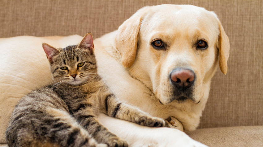 Rüyada Kedi ve Köpek Beslediğini Görmek