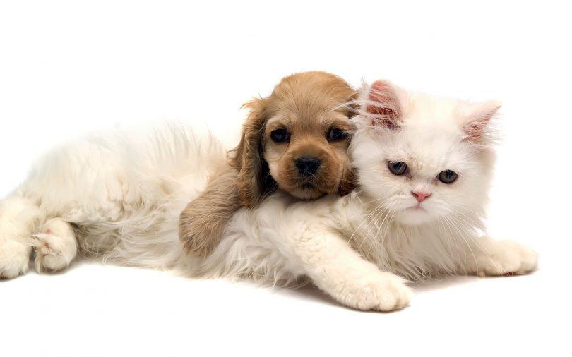 Rüyada Kedi ve Köpek Görmek