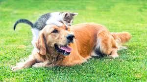 Rüyada Kedi ve Yavru Köpek Görmek
