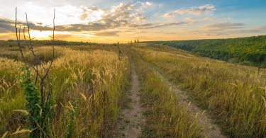 Rüyada Toprak Yolda Yürümek Görmek