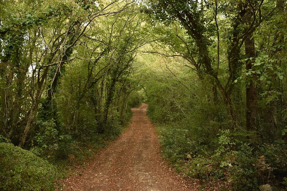 Rüyada Küçük Toprak Yolda Yürümek Görmek