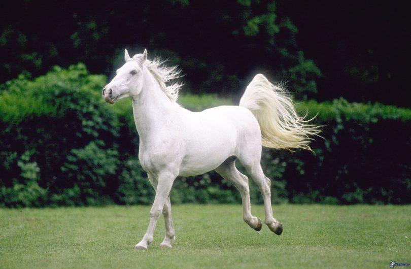 Rüyada Küçük At Görmek ve Sevmek