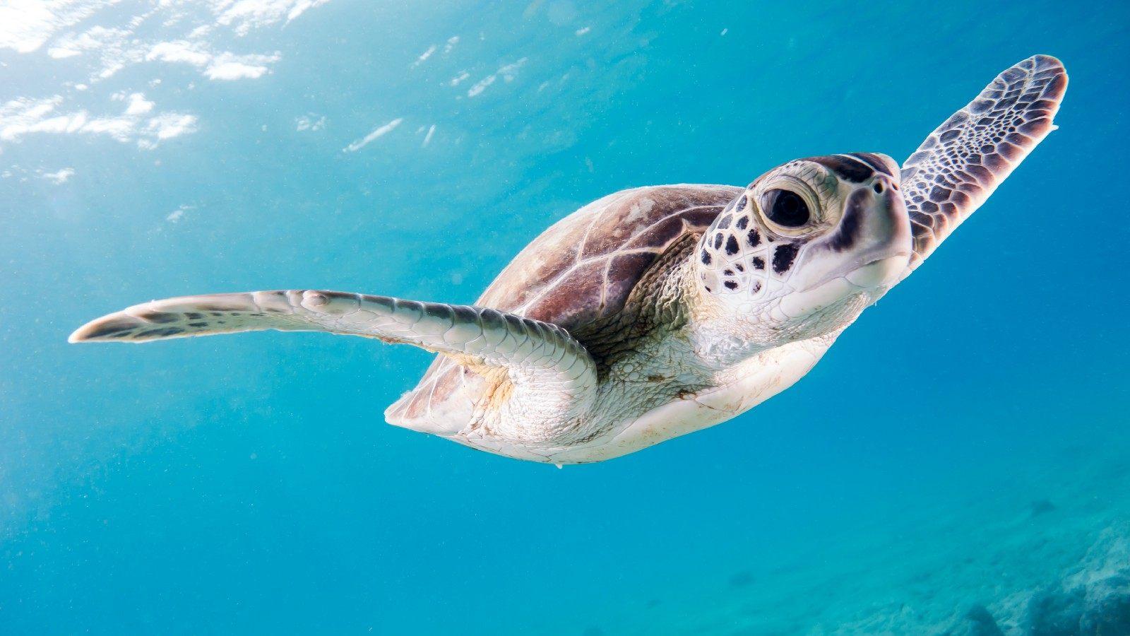 Rüyada Dev Kaplumbağa Görmek ve Sevmek