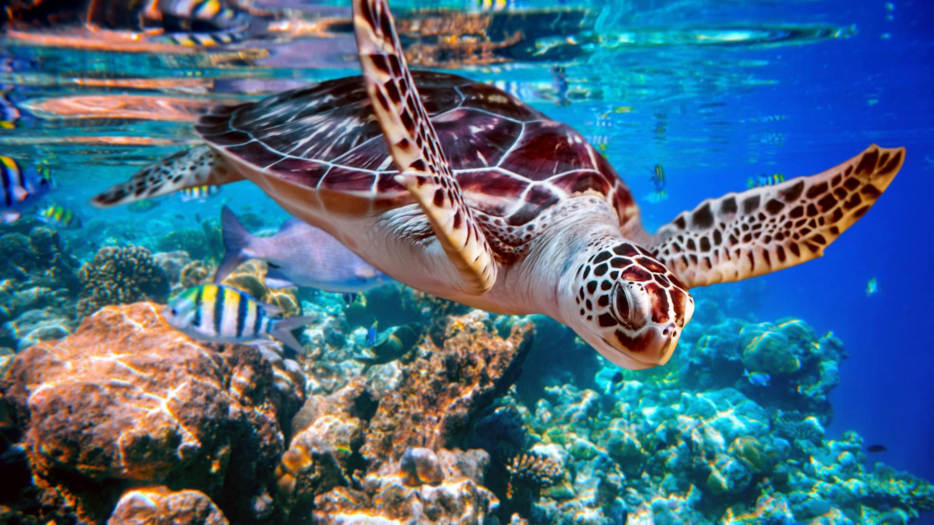 Rüyada Dev Kaplumbağa Görmek ve Beslemek