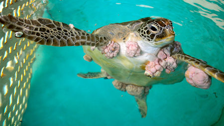 Rüyada Evde Dev Kaplumbağa Görmek