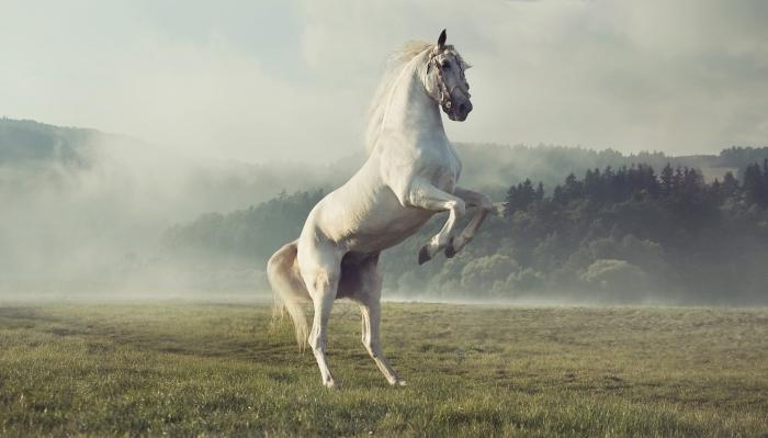 Rüyada Beyaz Küçük At Görmek