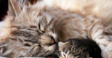 Rüyada Ölmüş Kedi Yavrusu Görmek