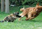 Rüyada Köpek ve Kedi Görmek