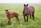 Rüyada At ve Yavrusunu Görmek
