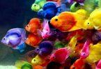Rüyada Rengarenk Balıklar Görmek