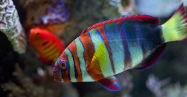 Rüyada Rengarenk Balık Görmek
