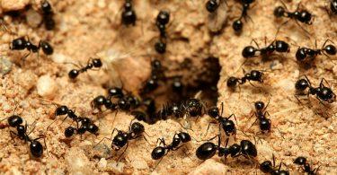 Rüyada Karınca Topluluğu Görmek