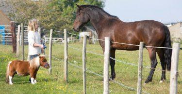 Rüyada Küçük At Görmek