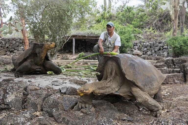 Rüyada Dev Kaplumbağa Görmek