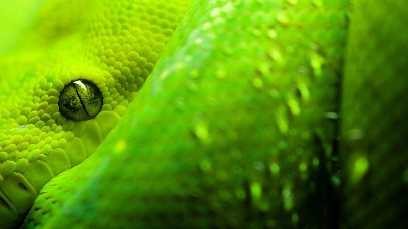 Rüyada Büyük Yeşil Yılan Görmek