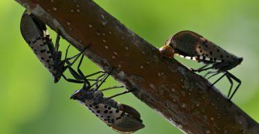 Rüyada Çok Böcek Görmek