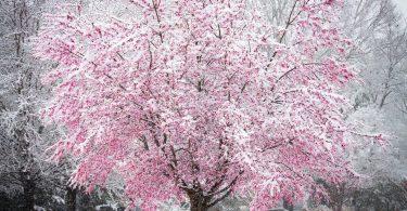 Rüyada Mevsimsiz Kar Görmek