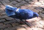 Rüyada Mavi Güvercin Yakalamak