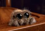 Rüyada Küçük Örümcek Görmek