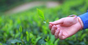 Rüyada Yeşil Yaprak Toplamak