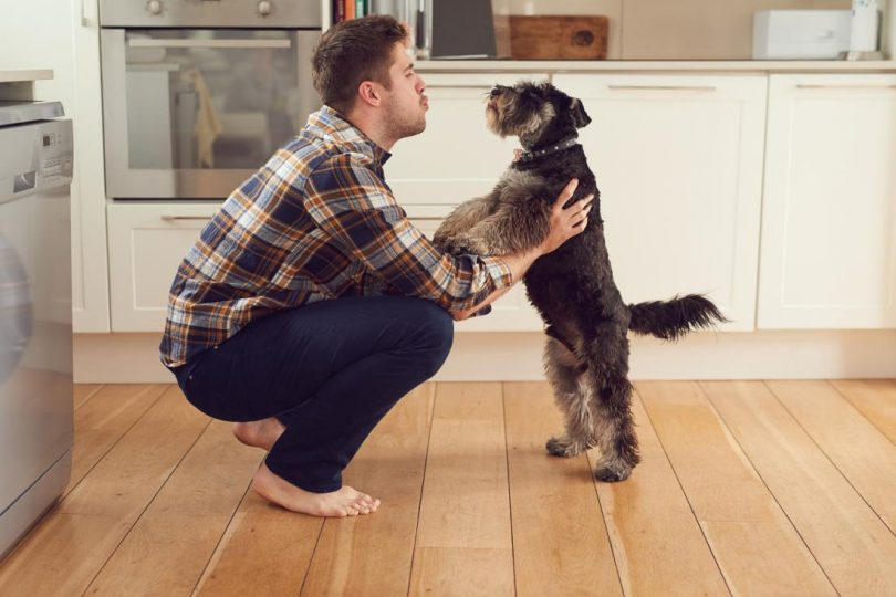 Rüyada Köpek İle Konuşmak