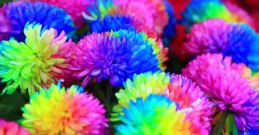 Rüyada Renkli Çiçek Görmek