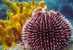 Rüyada Deniz Kestanesi Görmek