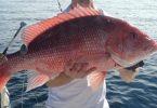 Rüyada Kırmızı Balık Görmek