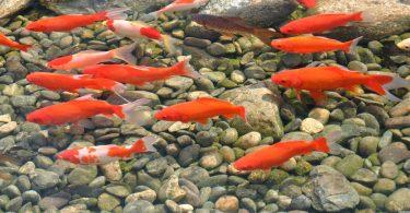 Rüyada Havuzda Balık Görmek