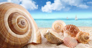 Rüyada Deniz Kabuğu Toplamak