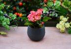 Rüyada Saksıya Çiçek Dikmek