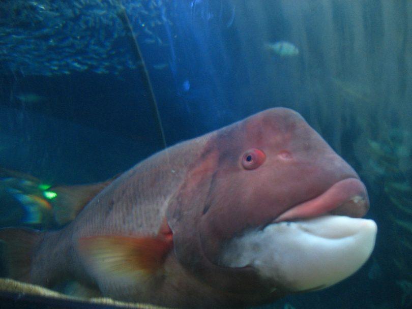 Rüyada Büyük Balık Yakalamak