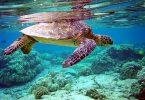 Rüyada Deniz Kaplumbağası Görmek