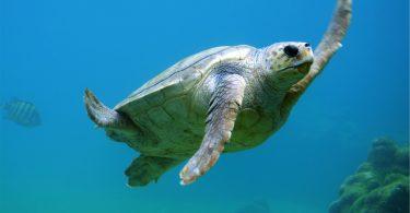 Rüyada Denizde Kaplumbağa Görmek