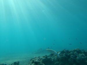 Rüyada Denizin Dibini Görmek
