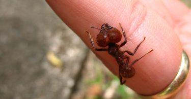 Rüyada Üzerinde Karınca Görmek