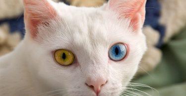 Rüyada Çok Kedi Görmek