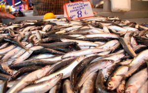 Rüyada Denizde Hamsi Balığı Görmek
