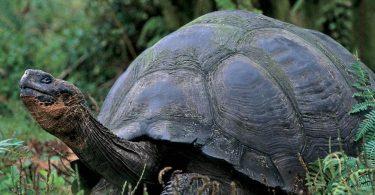 Rüyada Yeşil Kaplumbağa Görmek